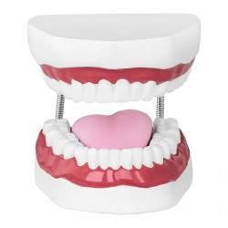 Dantų modelis - dantų rinkinys