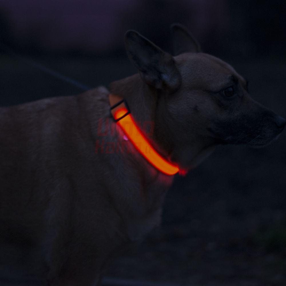 Šviečiantis LED antkaklis XS 32 cm