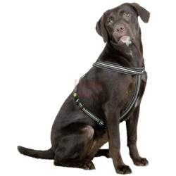Petnešos šunims Harness Xenos M